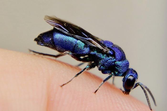 虫、カブトムシ、野鳥、魚など生き物ウェブ図鑑の「スモールズー」